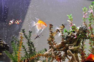 Почистване на аквариум